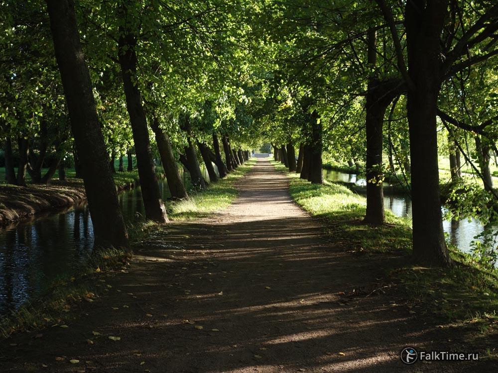 Липовая аллея вдоль каналов