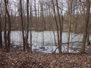 Замёрзший пруд